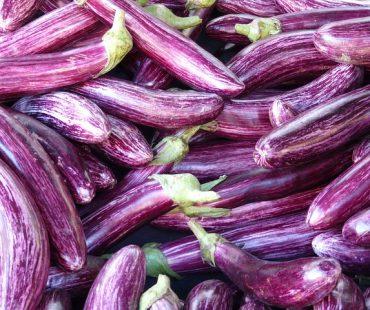 Patlıcan Fideleri Nasıl Ekilir-Dikilir?